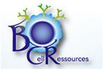Inauguration BCR